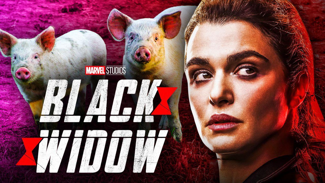 Alexei the Pig Black Widow cast