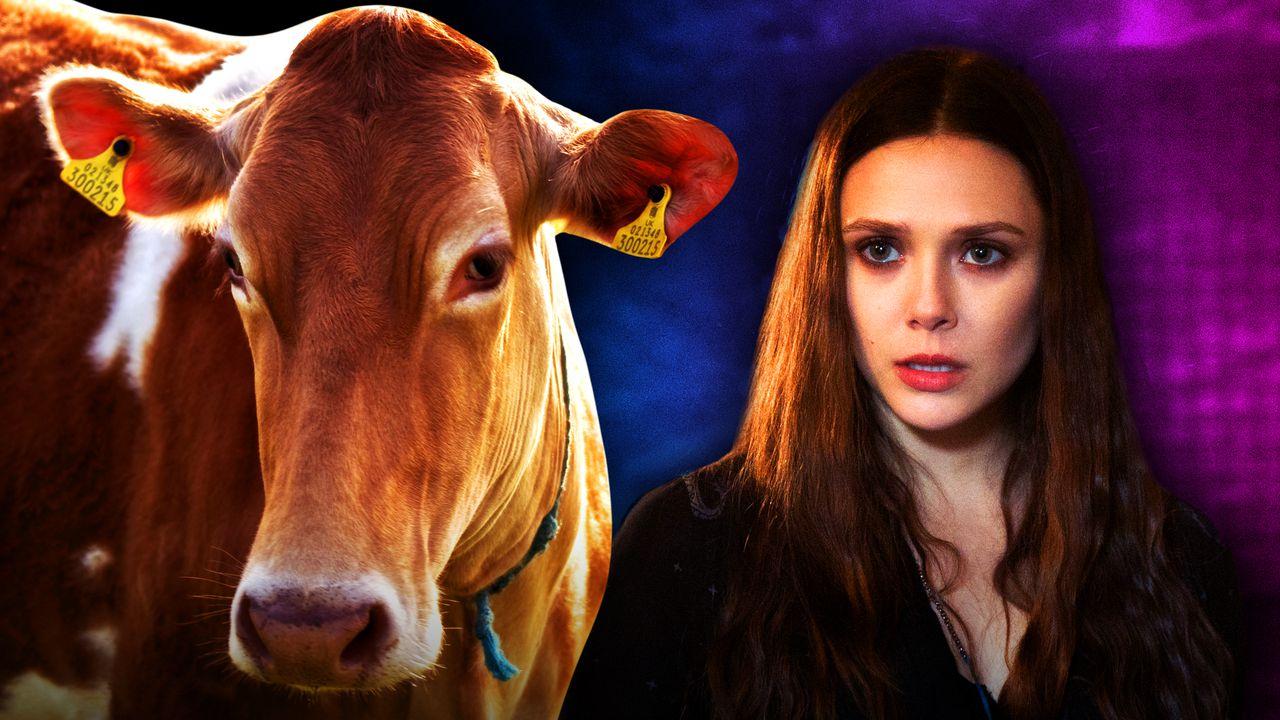 Cow, Wanda Maximoff WandaVision