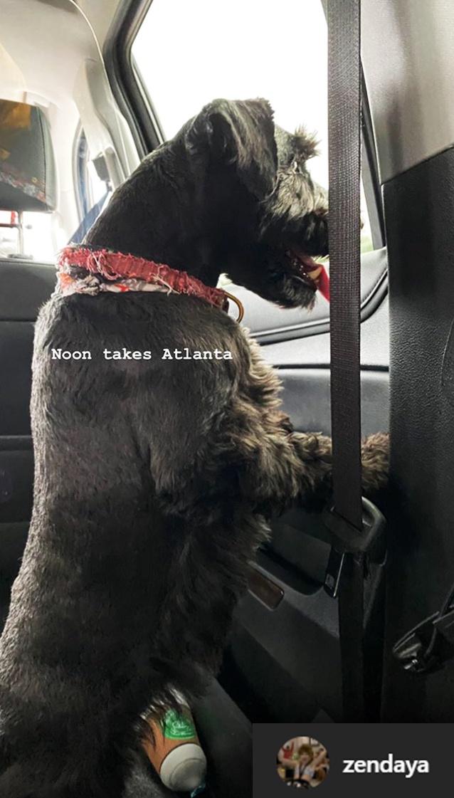 Zendaya Instagram Story